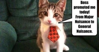 Boss Promoted Me Today - Cat humor