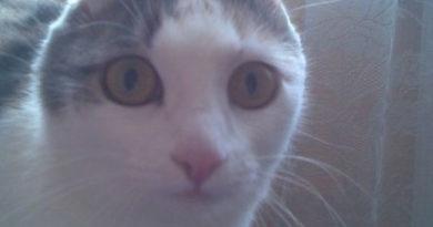 Bunnycat - Cat humor