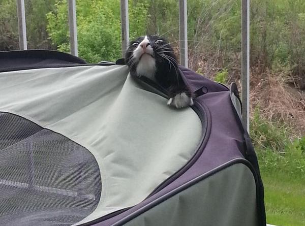 Camping was a bad idea - Cat humor