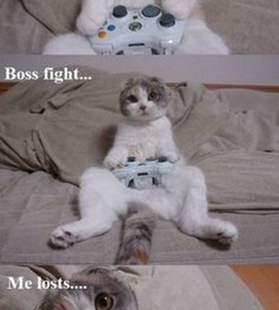 Can I play again? - Cat humor