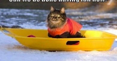 Can We Be Done Having Fun Now? - Cat humor