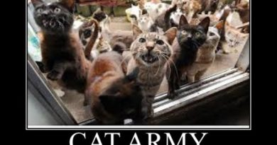 Cat Army - Cat humor