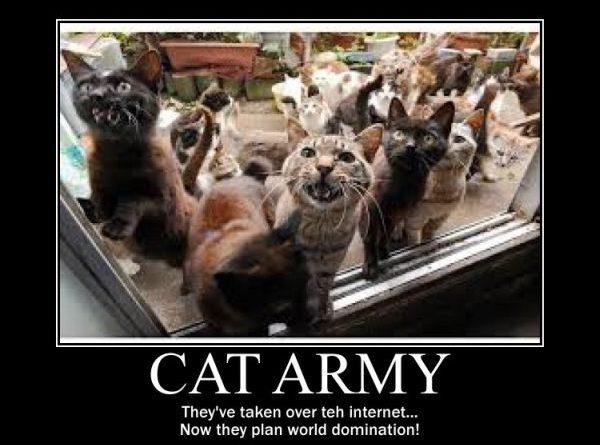 Cat Army - Cat humor