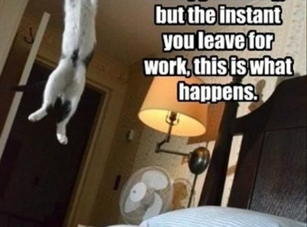 Cats May Act All Sleepy And Lazy - Cat humor