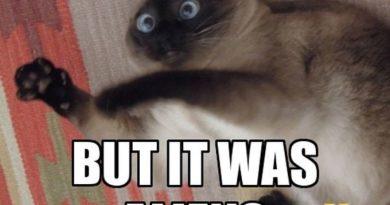 Conspiracy - Cat humor