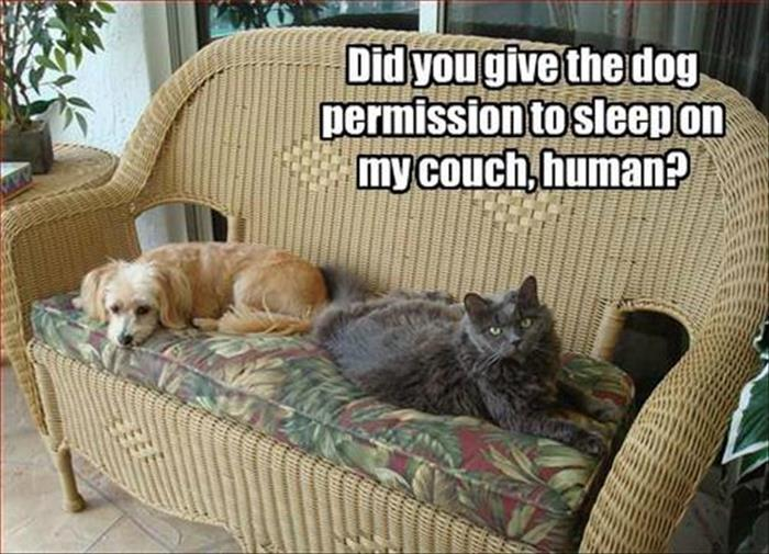 Did You Give The Dog Permission - Cat humor