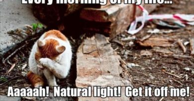 Every Morning - Cat humor