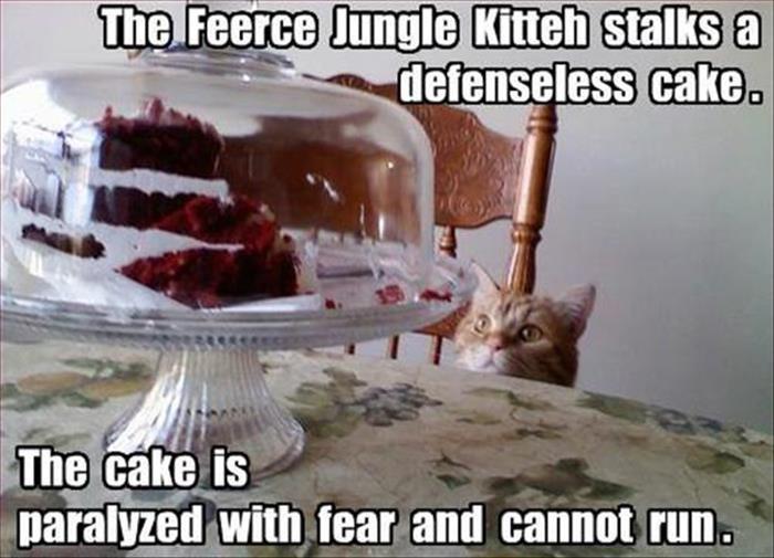 Feerce Jungle Kitteh - Cat humor