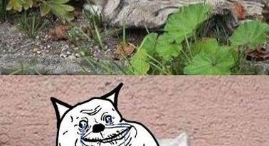 Forever Alone - Cat humor