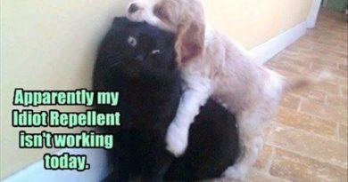 Idiot Repellent - Cat humor
