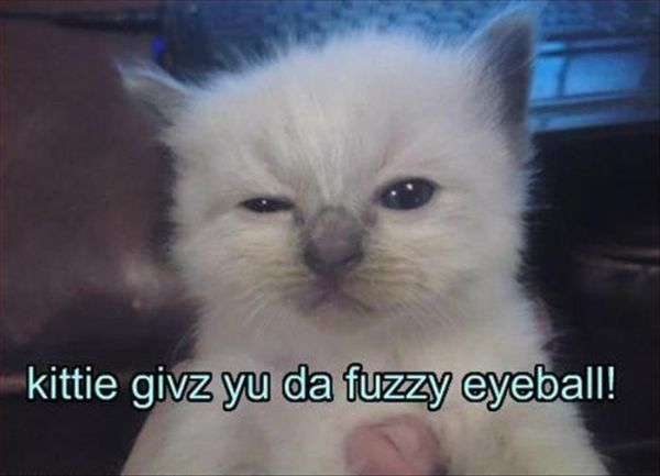Fuzzy Eyeball - Cat humor
