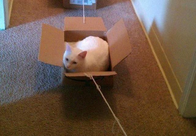 How To Walk Cats - Cat humor