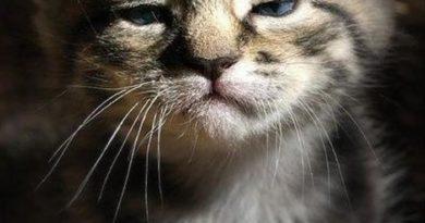 I Hate Mornings - Cat humor