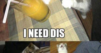 I Need Dis... - Cat humor
