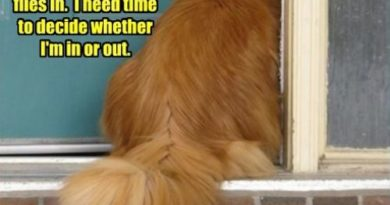 I Need Time To Decide - Cat humor
