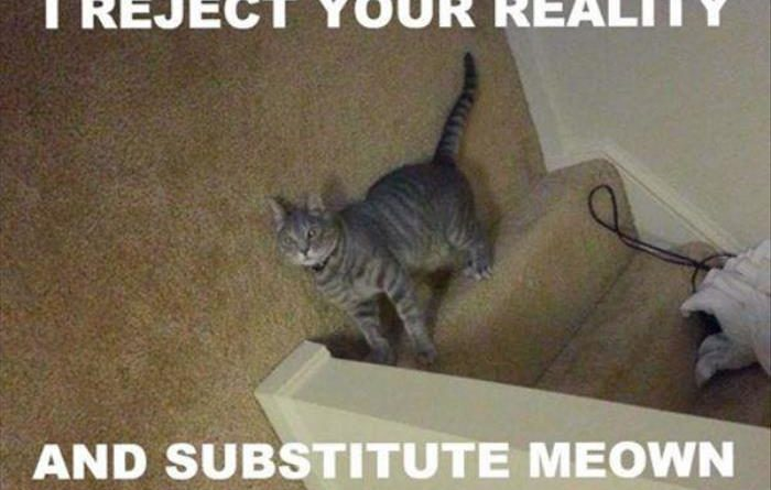 I Reject Your Reality - Cat humor