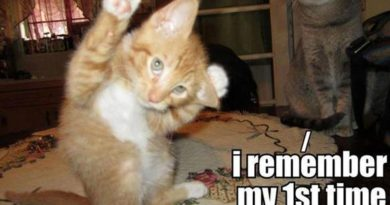 I Remember My First Time... - Cat humor