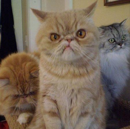 I Think I Came TO The Wrong Neighborhood - Cat humor
