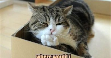 Let Me Think... - Cat humor