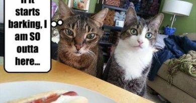 If IT Starts Barking... - Cat humor