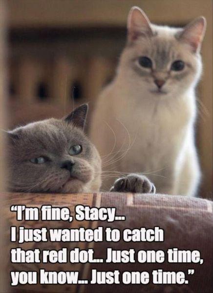 I'm Fine... - Cat humor