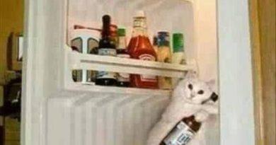 It's Just A Dream, Human - Cat humor