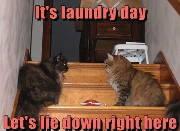 It's Laundry Day - Cat humor