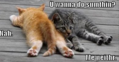 A Lazy Day - Cat humor