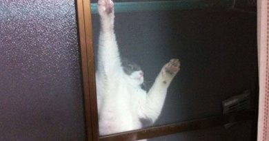 Let Me In - Cat humor