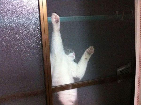 Let Me In - Cat humor