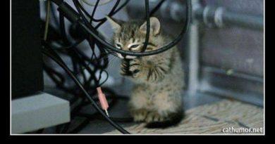 Let Me See... - Cat humor