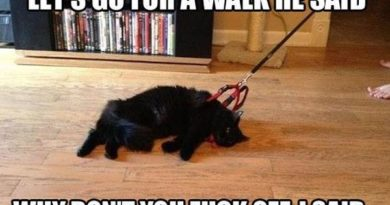 Let's Go For A Walk She Said - Cat humor