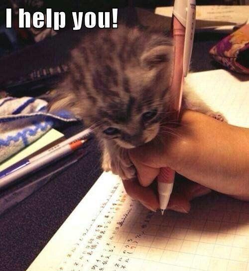 Little Helper - Cat humor