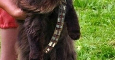 Mewbacca - Cat humor