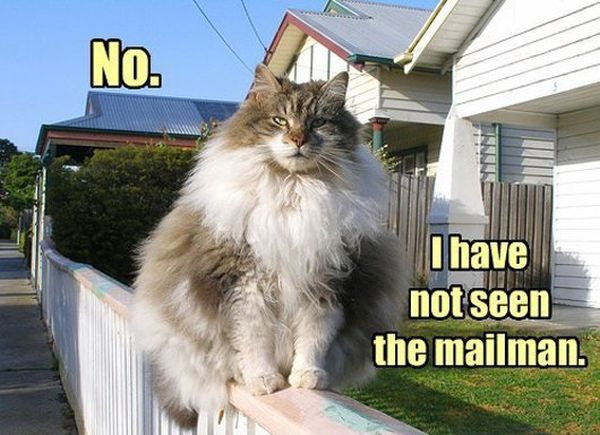 Cat Terrifies Mailman