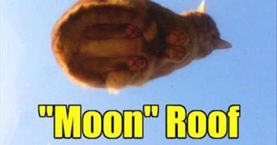 Moon Roof - Cat humor