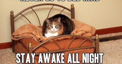 Never Go To Bed Mad - Cat humor