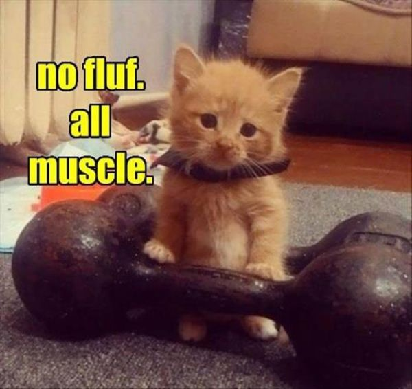No Fluf - Cat humor