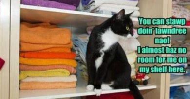 Stop Doing Laundry - Cat humor