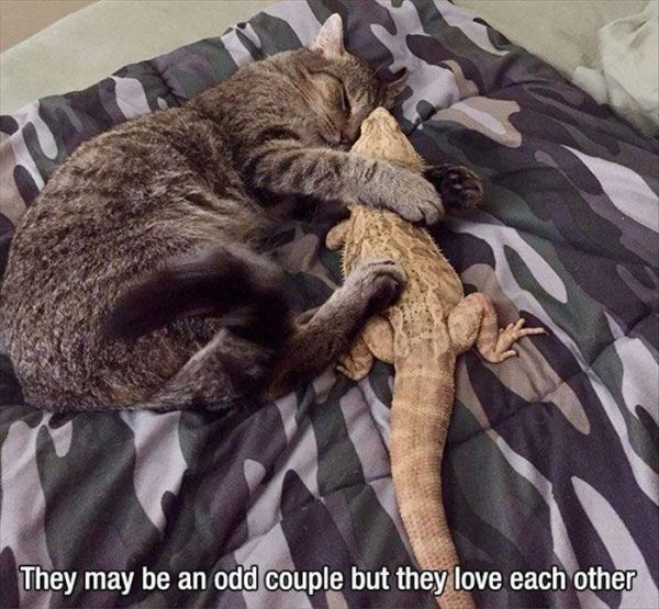 Odd Couple - Cat humor