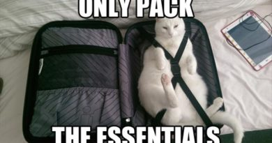 Only Pack The Essentials - Cat humor