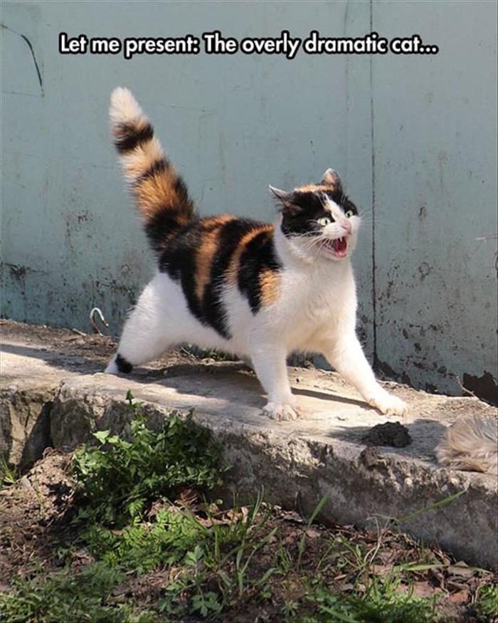 Overly Dramatic Cat - Cat humor