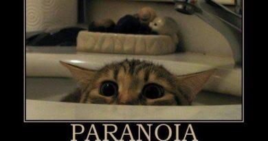 Paranoia - Cat humor