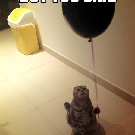 But You Said... - Cat humor