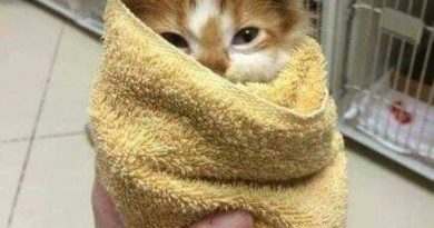 Purrito - Cat humor