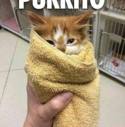 Purrito - Cat humor