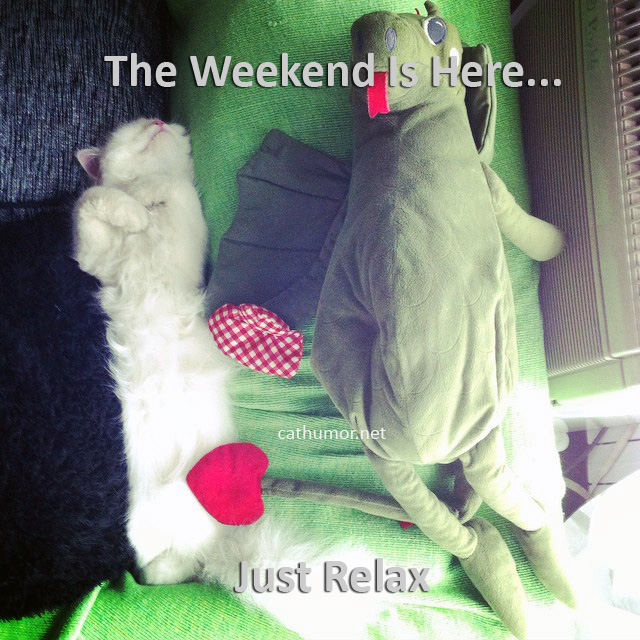 The Weekend Is Here... - Cat humor