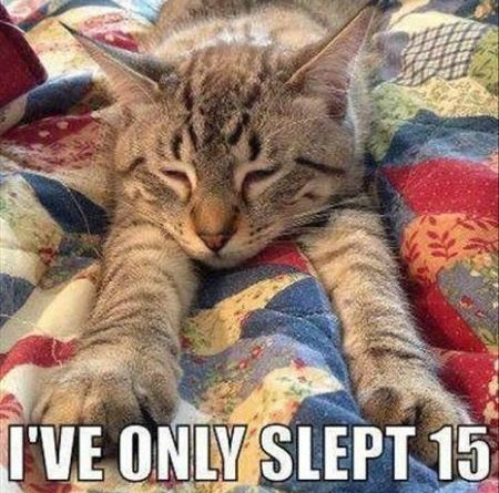 So Exhausted - Cat humor