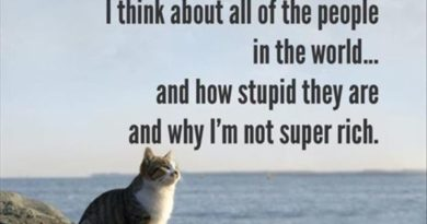 Sometimes, I Think About All The People In The World... - Cat humor