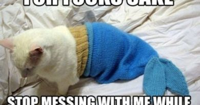 Stop Messing With Me While I Sleep - Cat humor